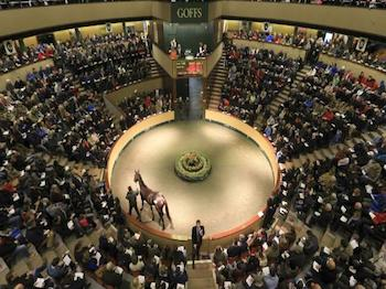 Two new arrivals from Goffs Ireland