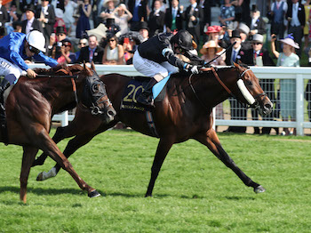 Zhui Feng to run in the Silver Royal Hunt Cup Handicap at Royal Ascot