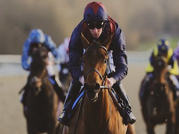 Ahorsecalledwanda wins at Lingfield - Saturday 8th February