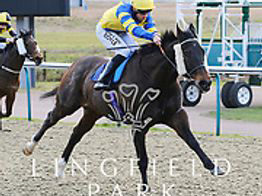 SAAHEQ - a winner at Lingfield on 21st April